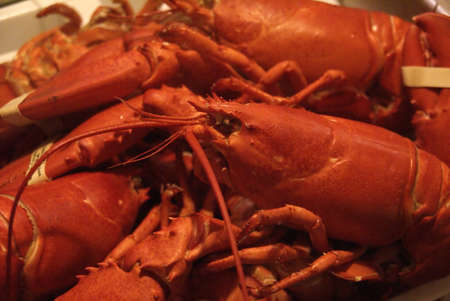 Lobsters fresh from the pot,   Mount Desert Island, Acadia National park, Maine, New England