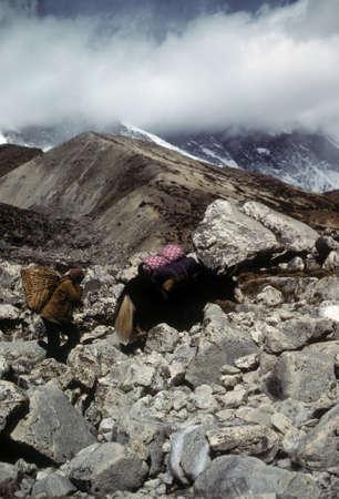 sherpa: Sherpa porter and yak carrying loads, Chyungma Pass, in Khumbu Himalaya, Nepal   Stock Photo