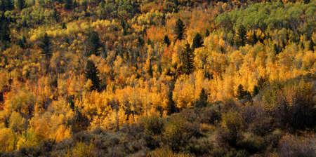 Fall colors in Idaho hills,  Bridger Teton National Forest, Idaho   photo