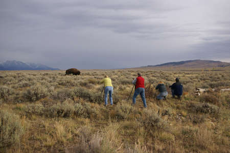 hunters: Buffalo hunters - photographers and bison, [Bison bison] Grand Teton National Park, Wyoming