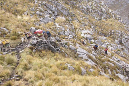 mule train: Mule train, carrying loads in high mountains of  Cordillera Huayhuash, Andes,  Peru, South America Stock Photo