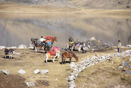 breaking up: Breaking up high camp and packing mules and donkeys, Carhuacocha Lake,   Andes, Peru, South America Editorial