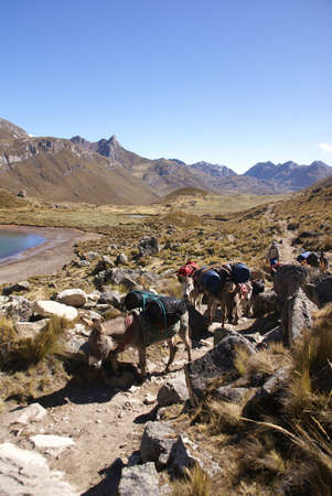 mule train: Mule train, carrying loads, in a broad valley of the Cordillera Huayhuash,Andes, Peru, South America