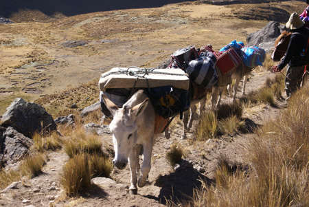 mule train: Mule train, carrying loads, with Cuyoc mountain in background, Cordillera Huayhuash,Andes, Peru, South America