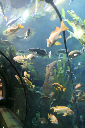 fish tank: Fish in walk through tank,  Aquarium, Newport,