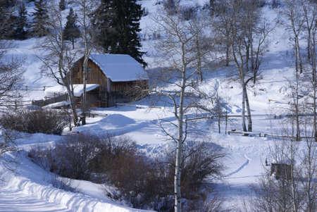 rancho: Antiguo granero occidental en la nieve con álamos, Cordillera, Colorado Foto de archivo