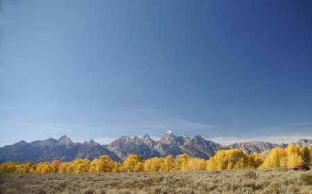 Otoño, álamos Dorados Y Nítidas Y Cielo Azul, Parque Nacional Grand ...