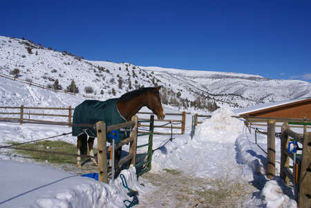 blanket horse: Brown horse with blue blanket on snowy winter morning,  Cordillera, Colorado