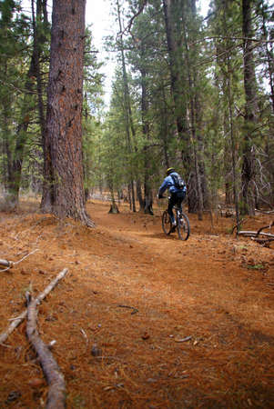 Mountain biker on conifer forest trail,  Deschutes River trail, Central Oregon  photo