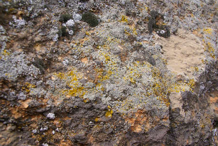 Lichen & moss, on volcanic rock,  Shevlin Park, Central Oregon  photo