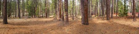 Panorama, ponderosa pines,  Deschutes River trail, Central Oregon photo