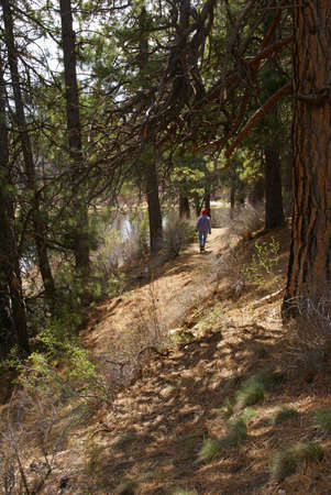 ponderosa: Hiker on trail with Ponderosa pines and river canyon,  Deschutes River trail, Central Oregon