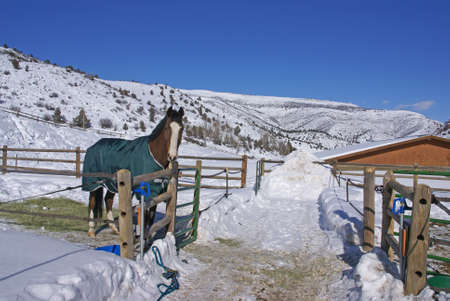 blanket horse: Brown horse with blue blanket on snowy winter morning,Cordillera,Colorado