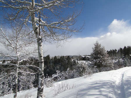 New snow on bare winter trees in rolling hills near Cordillera,Colorado