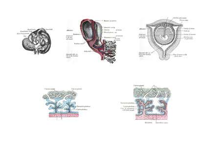 Anatomy Of The Uterus From Anatomy Of The Human Body Henry Stock