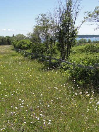 Wildflowers and meadow on Atlantic Ocean coast, on Mount Desert Island, Acadia National Park,Maine   版權商用圖片