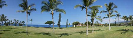 Panorama, coconut palms on golf course fairways near Keauhou,  Hawaii  Stock Photo - 16472794