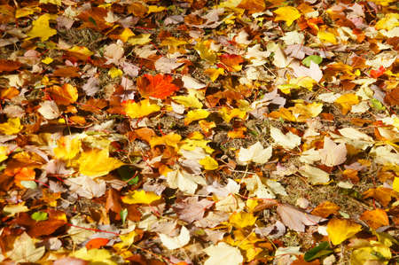 Detail, autumn leaves on the forest floor in the Seattle Arboretum