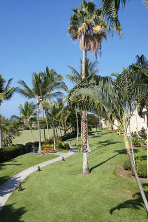 timeshare: Coconut palms and vacation condominiums  with manicured lawns at a timeshare resort near  Kona, Hawaii
