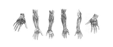 hand print: 6 dissections of the human hand and arm,  from out of print book, Human anatomy:  Stock Photo