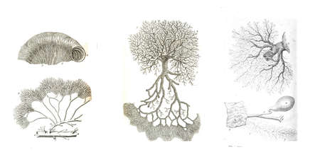 3 views of cellular networks  from The anatomy of the human body by  William Cheselden in 1763  Stock Photo - 16768068