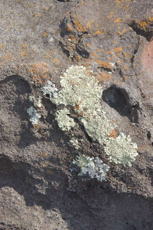Lichen on old lava flow, Puuhonua O Honaunau Place of Refuge National Park, Hawaii   photo