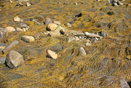 要約 - イエロー ・ アンプ、タイドプールにいる岩、マウント デザート島、アカディア国立公園、メイン州、ニュー イングランドでパターンを旋回