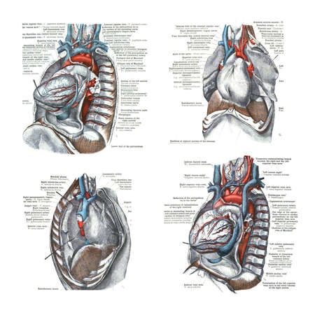 4 views of the heart and thoracic cavity,  from  An atlas of human anatomy: Carl Toldt - 1904 Stock Photo - 17810986