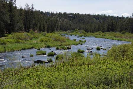 pine creek: Conifer forest along the Deschutes River  in the high desert of central Oregon, near Redmond.   Stock Photo