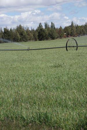 Self propelled irrigation sprayers in field Central Oregon Stok Fotoğraf - 20885625