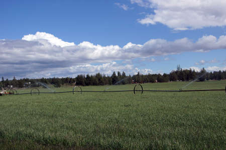 propelled: Self propelled irrigation sprayers in field Central Oregon