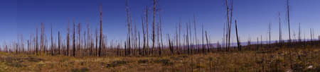 Panorama, Aftermath of forest fire of 2000,  Kaibab Plateau, Arizona