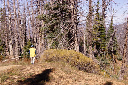 spectra: Hiker in conifer forest approaching Spectra Point  Cedar Breaks National Monument, Utah