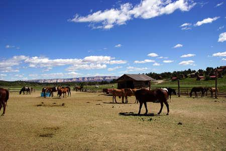 Brown horses on a desert ranch near Zion National Park, Utah  photo