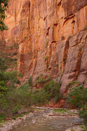 Sheer cliffs confine the Virgin River  on the forested Riverside Walk in Zion National Park, Utah   photo