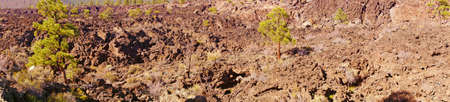 ponderosa: Panorama, Lava flow with Ponderosa pines, Sunset Crater National Monument, Arizona  Stock Photo
