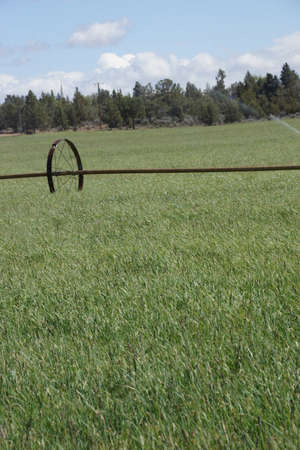 propelled: Self propelled irrigation sprayers in field Central Oregon   Stock Photo