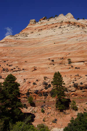 White and red sandstone mountains  with sparse trees Zion National Park, Utah   photo