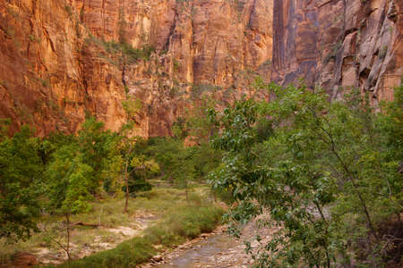 forested: Sheer cliffs confine the Virgin River  on the forested Riverside Walk in Zion National Park, Utah   Stock Photo