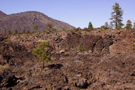 ponderosa: Lava flow with Ponderosa pines, Sunset Crater National Monument, Arizona