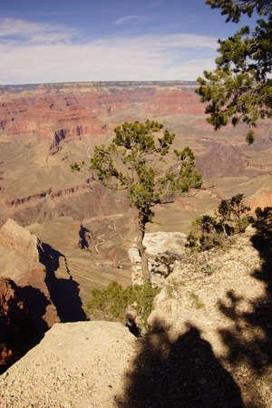 snag: Juniper snag, looking north over the Grand Canyon and the Colorado River, at the Grand Canyon National Park, Arizona