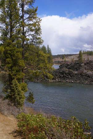 ponderosa: Ponderosa pines and river canyon,  Deschutes River trail, Central Oregon