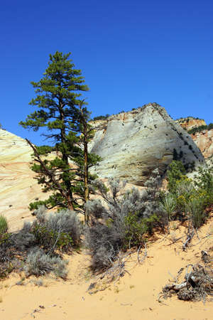 fossilized: Mountain with cross current layers of colored sandstone, created from fossilized dunes and shifting winds over millions of years, Zion National Park, Utah  Stock Photo