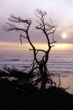 snag: Tree snag silhouette at sunset on an Oregon Beach near Yaquina Head, Newport.