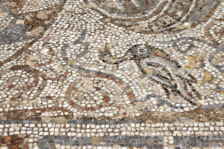 mosaic: Duck mosaic    from ancient Greek and Roman city of  Ephesus,  Turkey