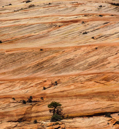 fossilized: Detail, cross current layers of red sandstone, created from fossilized dunes and shifting winds over millions of years, Zion National Park, Utah