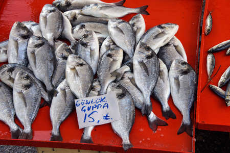 gilthead bream: Gilt-head bream ( cupra, Sparus aurata)     at the weekly market  in Canakkale,  Turkey