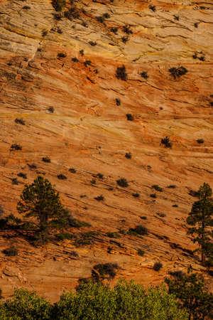 strata: Patterns in strati di arenaria di colline in Zion National Park, Utah
