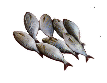 Sarpa salpa ( Salema porgy ) can cause hallucinations when eaten, a common fish   at the weekly market  in Canakkale,  Turkey Stock Photo