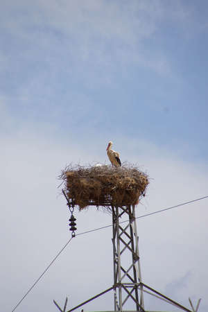 southeastern: Stork and its young nesting on electric tower,  in Southeastern Turkey Stock Photo